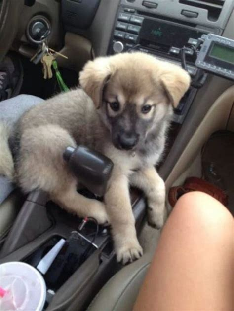 Cute Dogs For Your Monday Blues   Michael Bradley - Time